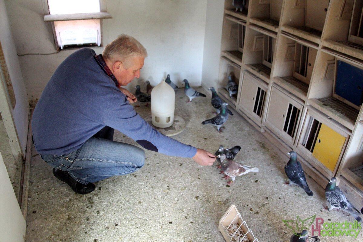 Orzeszki ziemne - przysmak gołębi