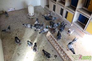 Gołębniki wewnątrz (30.09.2013)